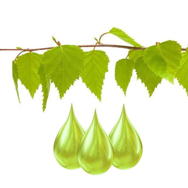 Bouleau feuilles Extrait
