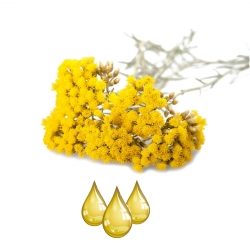 Immortelle (Ever Lasting Flower Extract) EXTRAIT HYDROGLYCÉRINÉ