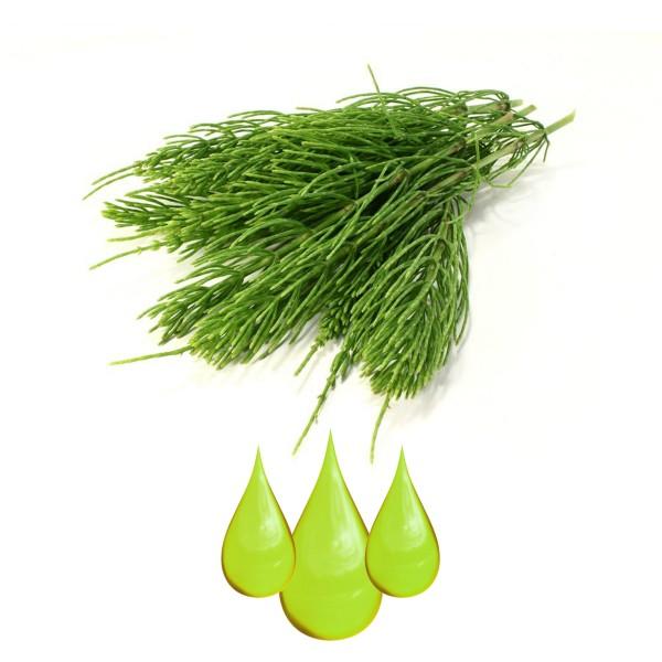Prêle (Horsetail Herb Extract) EXTRAIT HYDROGLYCÉRINÉ