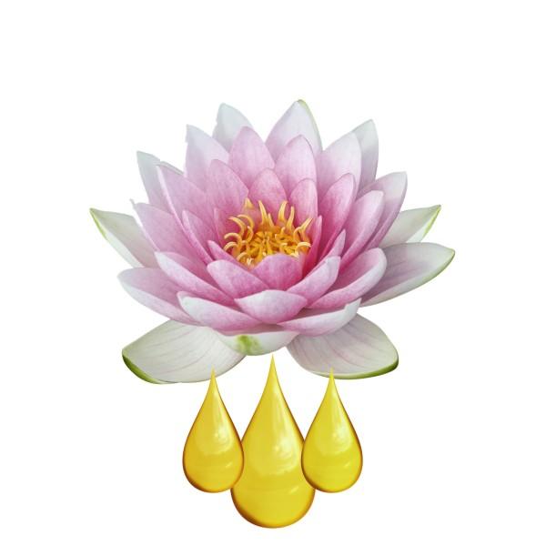 Lotus EXTRAIT HYDROGLYCÉRINÉ