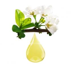 Reine des prés BIO macérat huile bio