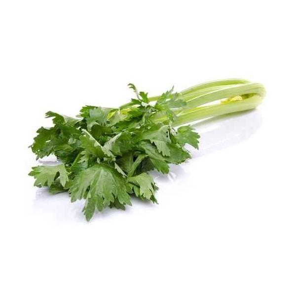 Celeri Semence origine France