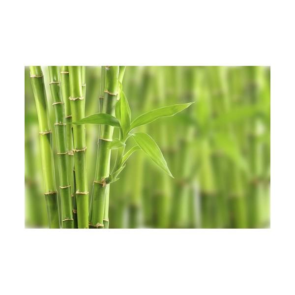 Parfum cosmétique Bambou
