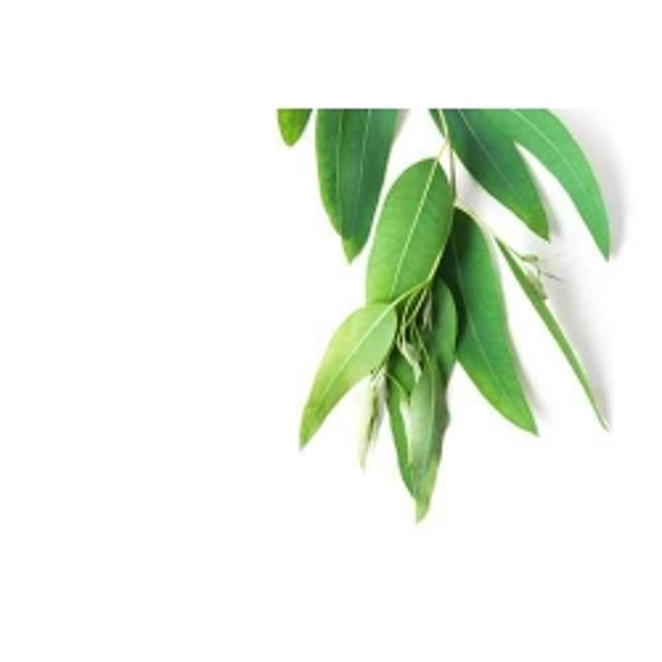 Eucalyptus smithii Bio HUILE ESSENTIELLE