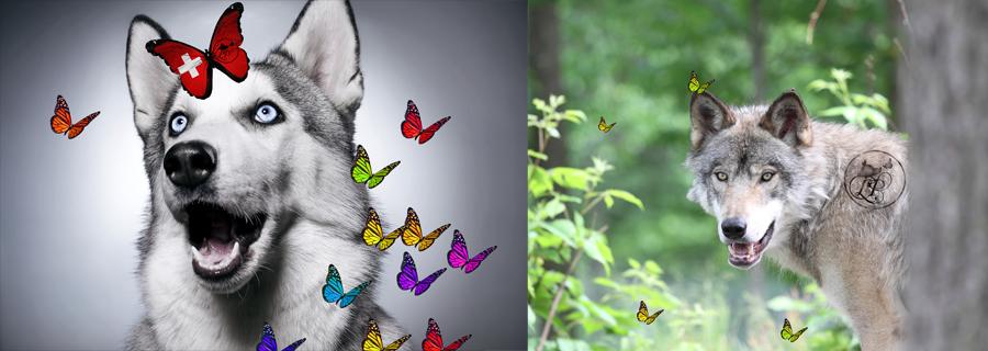 cosmétiques et savons non testés sur animaux sans cruauté
